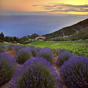 Lavendel auf Hvar